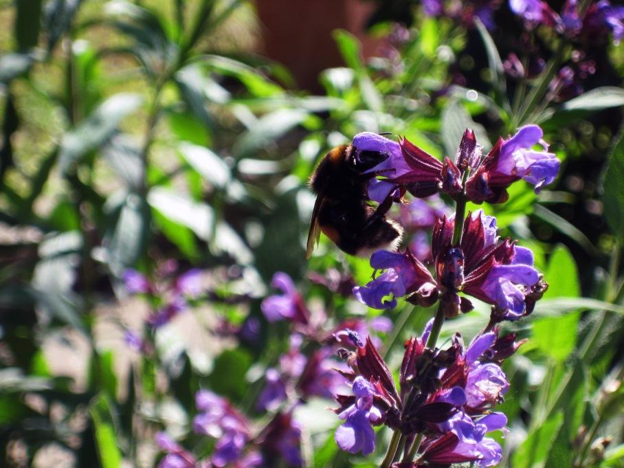 Biene und Blüte_web