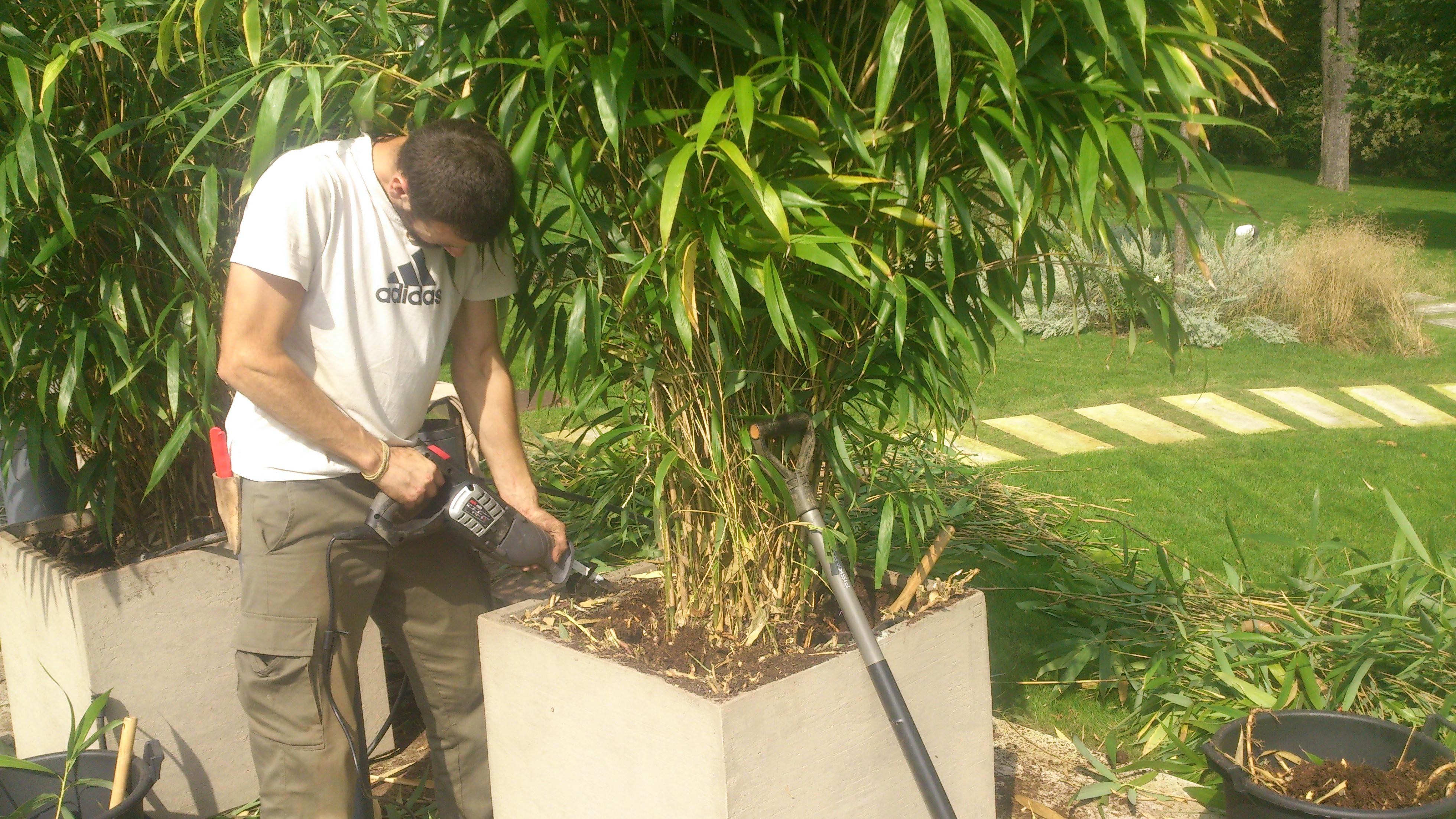 Bambus Rhizome Entfernen : bambus in pflanzgef en garten freisinn ~ Watch28wear.com Haus und Dekorationen