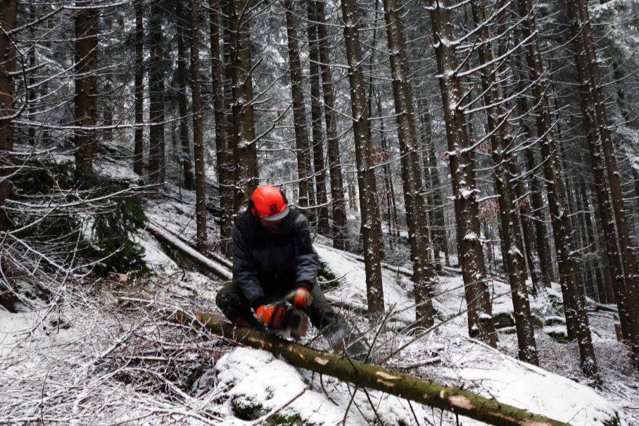 Waldwirtschaft_01_kl