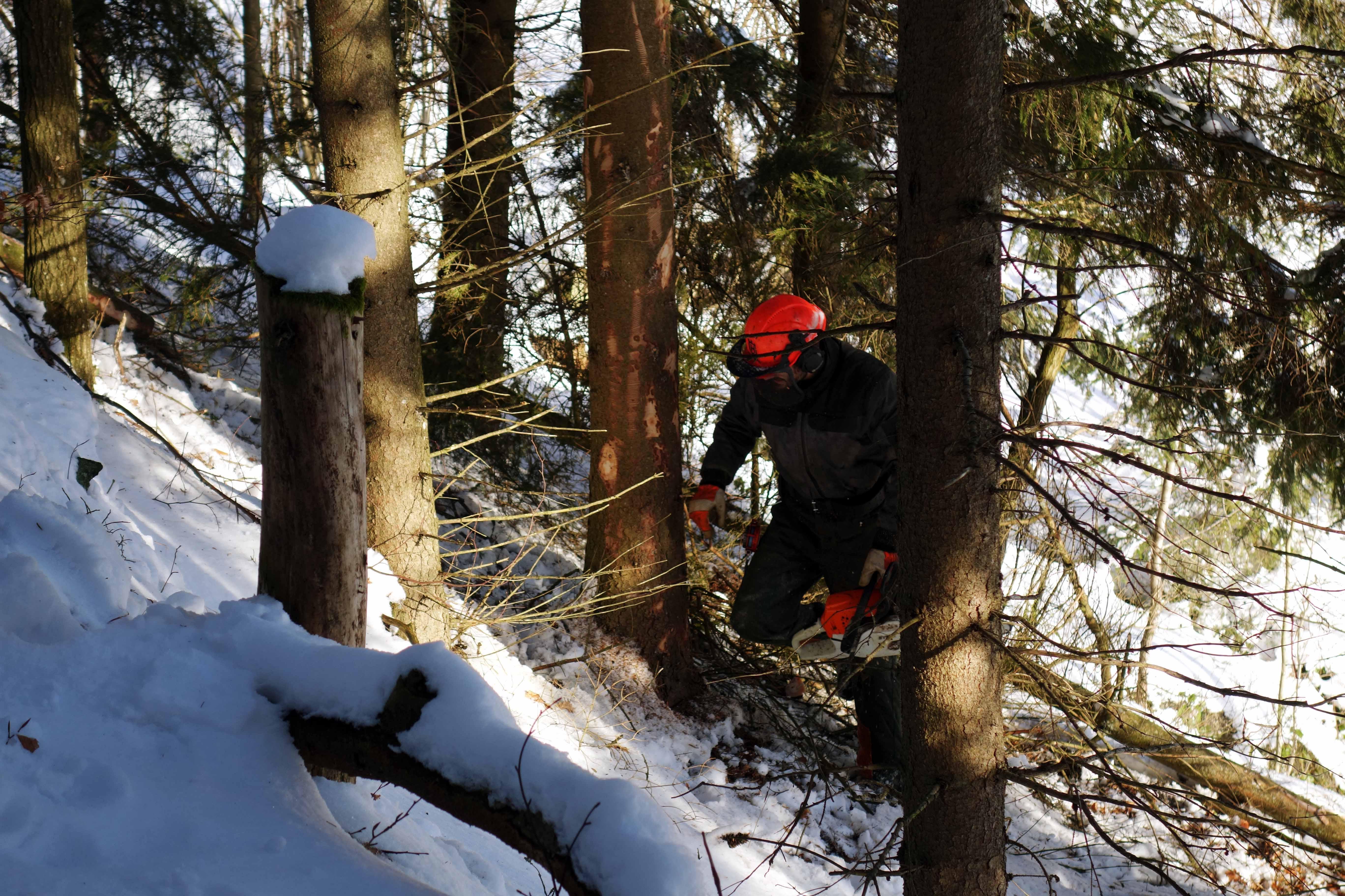 Waldwirtschaft_02_kl