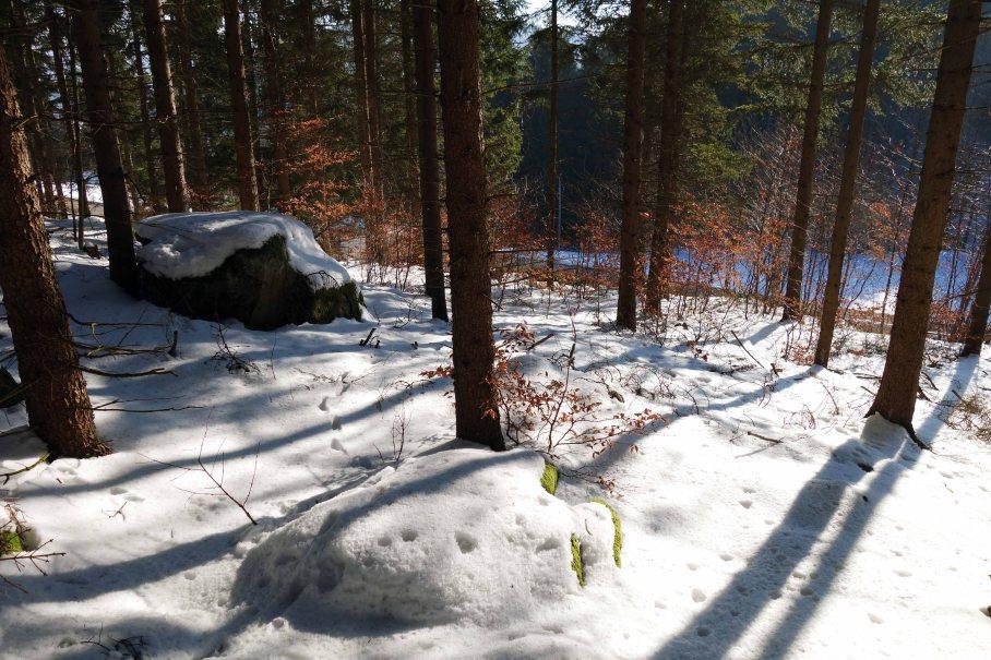 Waldwirtschaft_03_kl