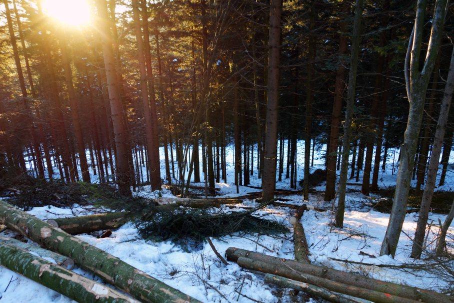 Waldwirtschaft_04_kl